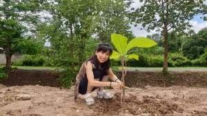 Rui Matsunaga planting a teak tree at Studio 88 Artist Residency, Chiang Mai